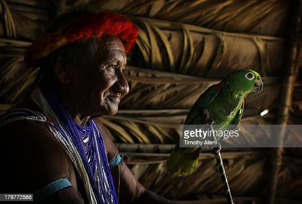 Tribesman & Yellow-shouldered Amazon Parrot