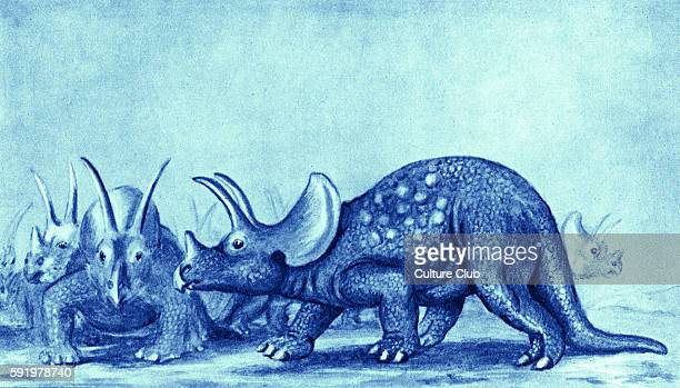 Triceratops after artist impression Caption reads 'In the age to which this threehorned creature belongs reptiles took the place which mammals and...