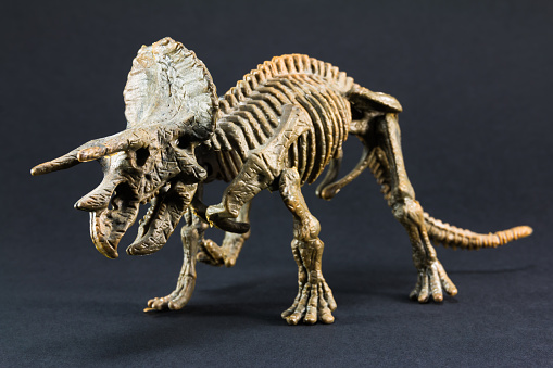 Triceratops fossil dinosaur skeleton model toy 518587064