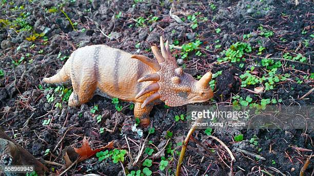 Triceratops Toy Figurine In Backyard
