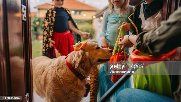 trick or treat? - halloween stock pictures, royalty-free photos & images