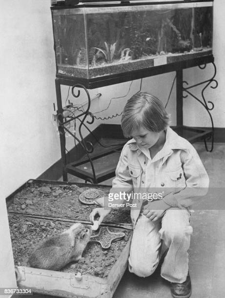 Trigg Hesse a pupil at Pleasant View Elementary School 15920 W 10th Ave east of Golden feeds Brenda the guinea pig Dr John Radloff principal says...
