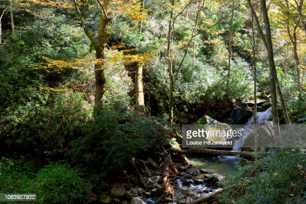 trillium gap trail in autumn, smoky mountains national park - roaring fork motor nature trail stock pictures, royalty-free photos & images