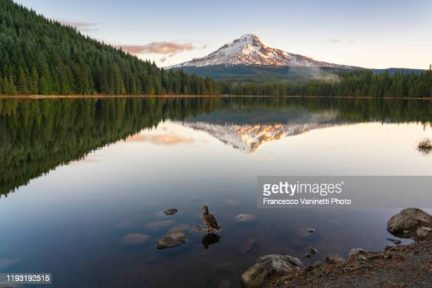 trillium lake and mt hood at sunrise, government camp, or, us. - named wilderness area stock pictures, royalty-free photos & images