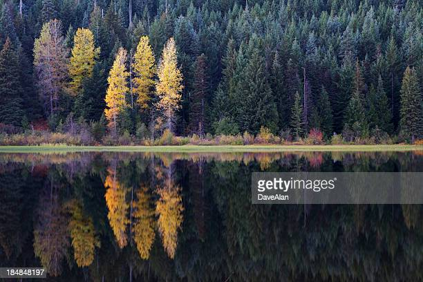 60 Top Trillium Lake Pictures, Photos, & Images - Getty Images