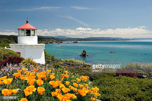 trinidad memorial lighthouse h - california golden poppy stock pictures, royalty-free photos & images