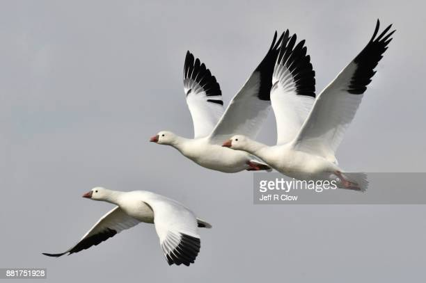 Trio in flight