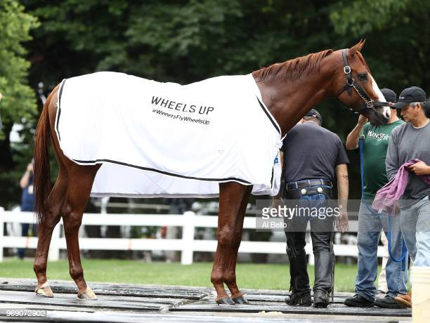 Triple Crown and Belmont Stakes contender Justify is bathed after traing prior to the 150th running of the Belmont Stakes at Belmont Park on June 7...