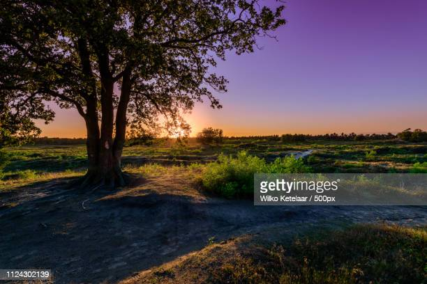 triplets - zonsondergang stock pictures, royalty-free photos & images