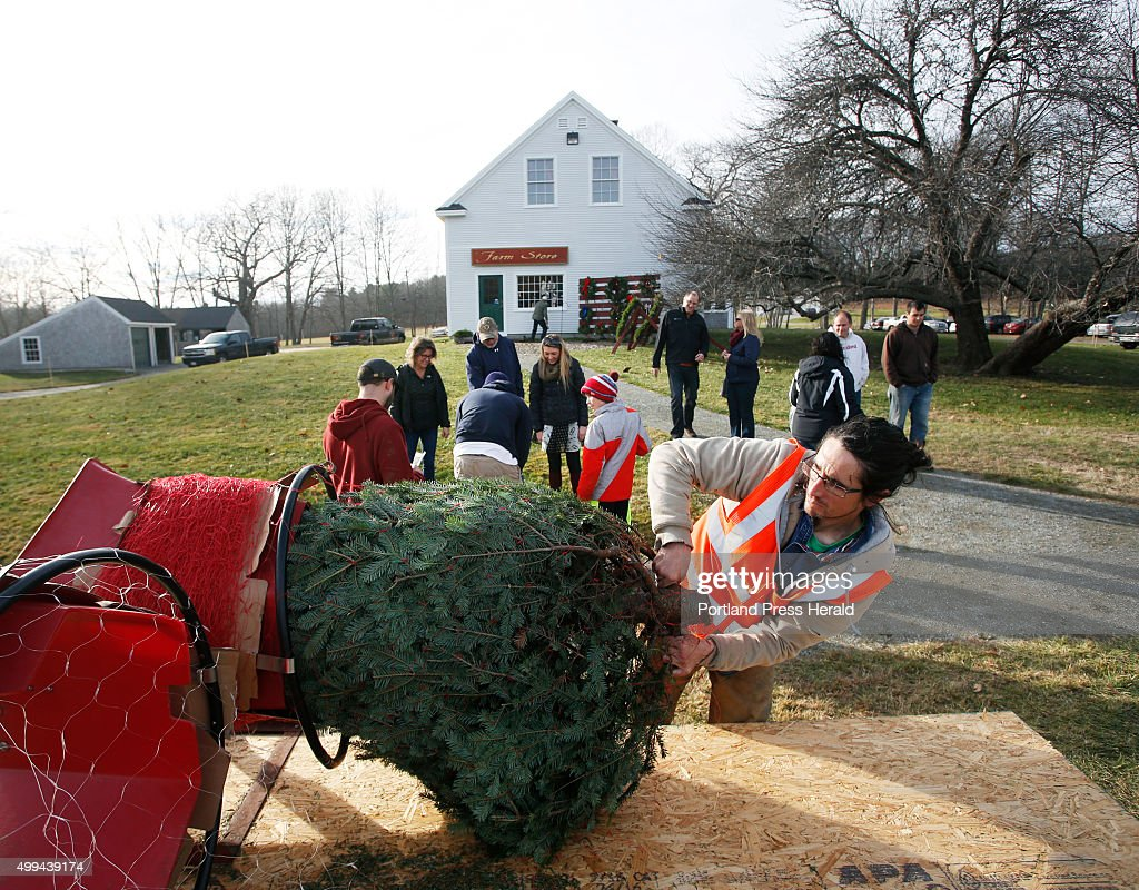 Christmas tree farm Pictures | Getty Images