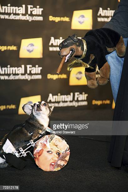 Triumph the insult comic dog judges the Larry Flynt Hustler Dog at the Animal Fair Magazine's Annual Canine Pet Halloween Party October 30 2006 in...