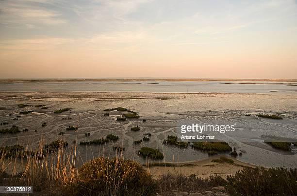 troia peninsula, nature reserve and wildlife sanctuary, rio sado, ribatejo, portugal - estuary stock photos and pictures