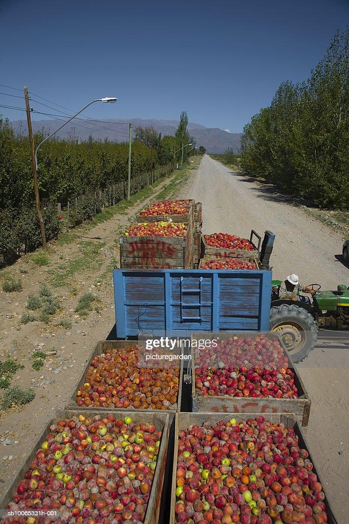 Trolleys full of apple in field : Foto stock