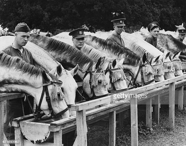 Troopers of the Royal Scots Greys regiment watering their mounts at the drinking trough during a training exercise in East Anglia as the last horse...