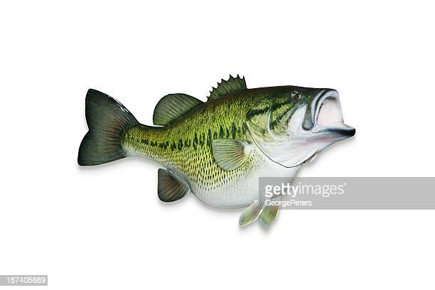 trophy largemouth bass with clipping path - largemouth bass stock pictures, royalty-free photos & images