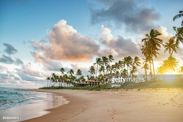 tropic beach in guarajuba, brazil - brazil stock pictures, royalty-free photos & images