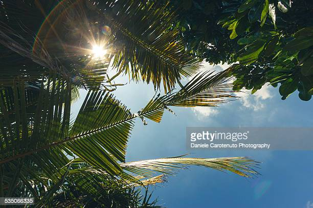 tropic summer - daniele carotenuto stock pictures, royalty-free photos & images