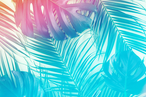 Tropical and palm leaves in vibrant gradient holographic colors. Minimal art surrealism concept. 1148759102