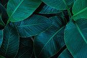 tropical banana leaf texture garden abstract