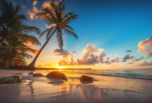 Tropical beach and beautiful sunrise view in Punta Cana bay, Dominican Republic 1133073540