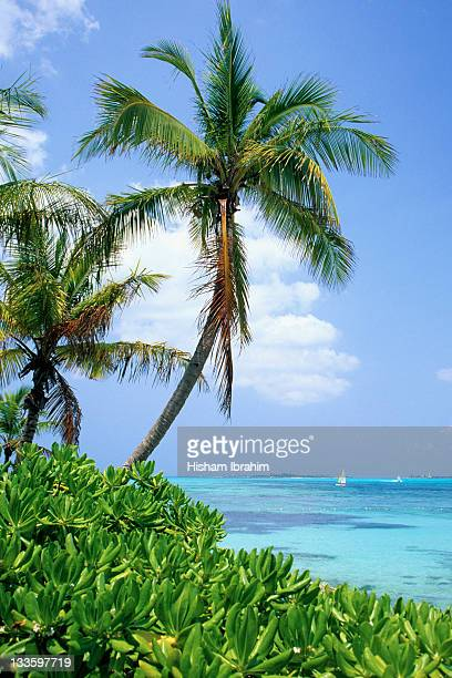 tropical beach and palm trees, nassau, bahamas - cable beach bahamas stock photos and pictures