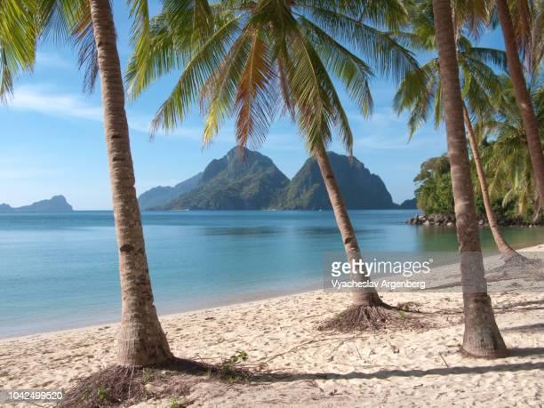 tropical beach and tropical palms trees in bacuit bay, palawan, philippines - argenberg bildbanksfoton och bilder