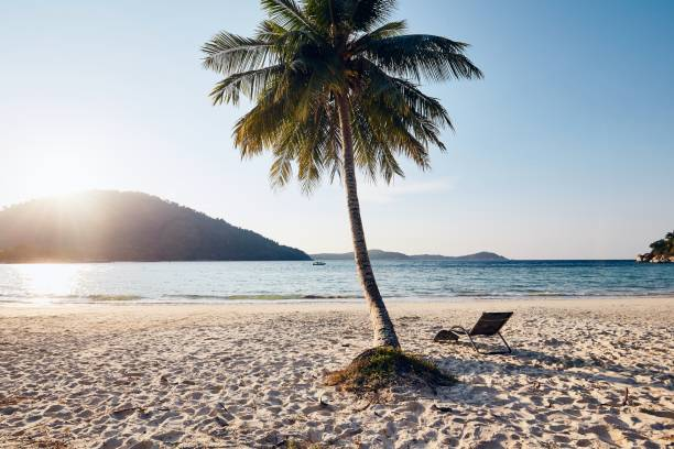 Tropical Beach At Beautiful Sunset. Empty Chair Under Palm Tree Against Sea.