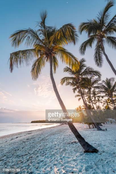 tropical beach at sunset, dominican republic - karibik stock-fotos und bilder