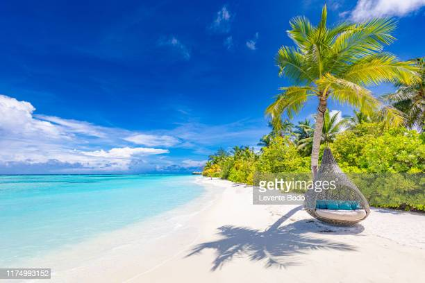 tropical beach background as summer landscape with beach swing or hammock and white sand and calm sea for beach banner. perfect beach scene vacation and summer holiday concept. boost up color process - tropical tree stock pictures, royalty-free photos & images