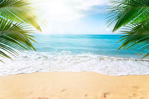 Tropical beach background 1145474071