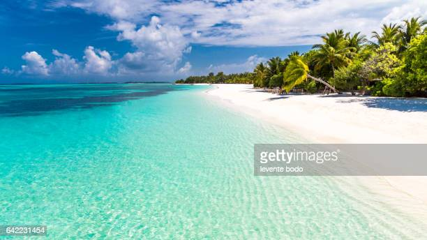 Tropical beach beautiful palm trees sun beds loungers relaxing moody blue sky clouds blue lagoon luxury travel summer holiday vacation background concept design paradise beach Maldives zen inspiration