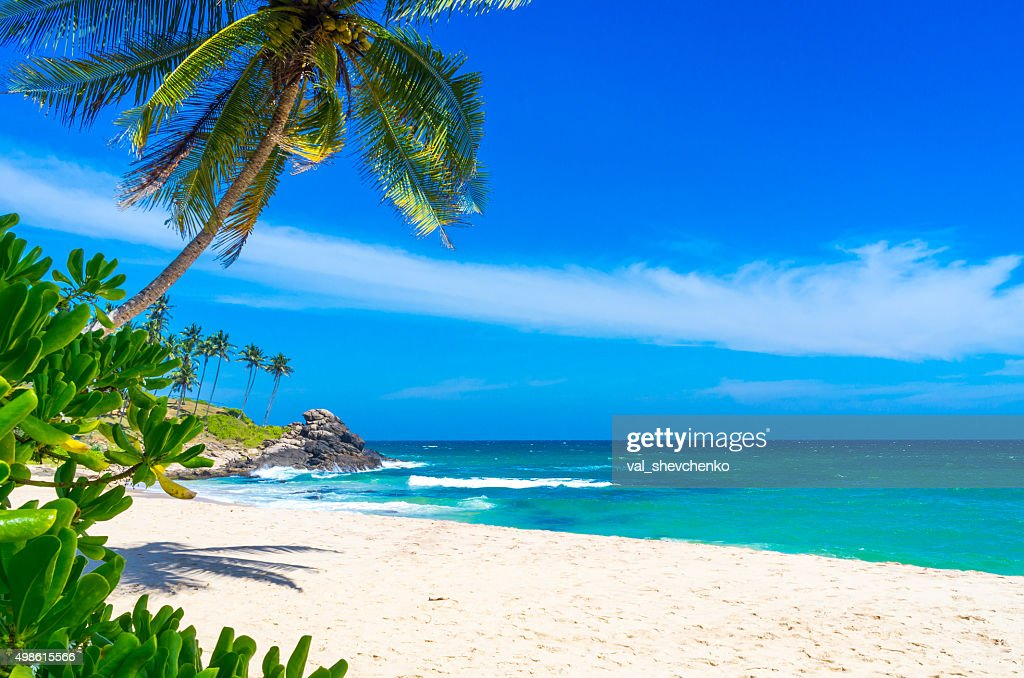 free tropical beach beach images  pictures  and royalty photographer clip art images photography clipart