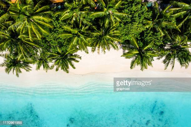 tropical beach in the ocean, maldives - pacific ocean stock pictures, royalty-free photos & images