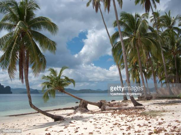 tropical beach in western pacific, idyllic tropical beauty, palawan, philippines - argenberg ストックフォトと画像
