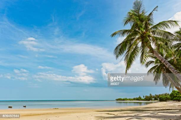 tropical beach, ko samui, thailand - ko samui stock photos and pictures