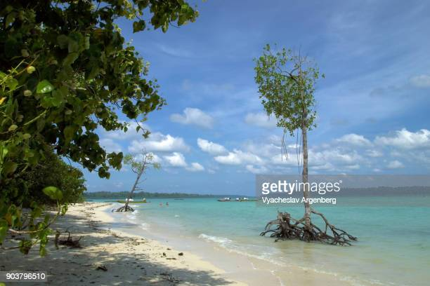 tropical beach of south andaman and nicobar islands, paradise fantasy - argenberg stock pictures, royalty-free photos & images
