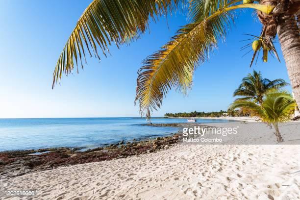 tropical beach on the caribbean sea, cancun, mexico - playa del carmen fotografías e imágenes de stock