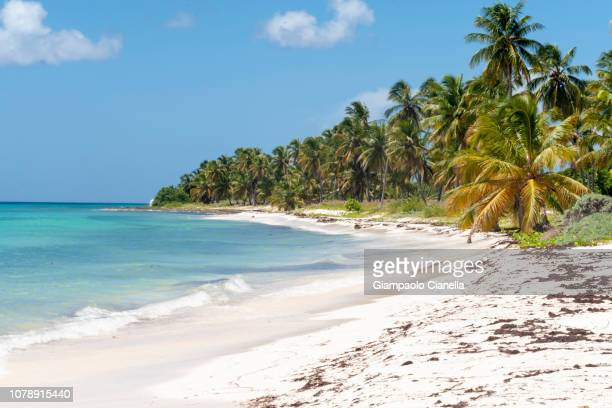 tropical beach - paisajes de republica dominicana fotografías e imágenes de stock