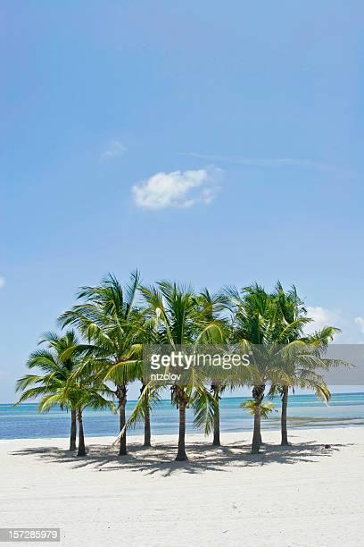トロピカルビーチ - キービスケイン ストックフォトと画像