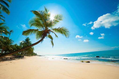 Tropical beach 157834378