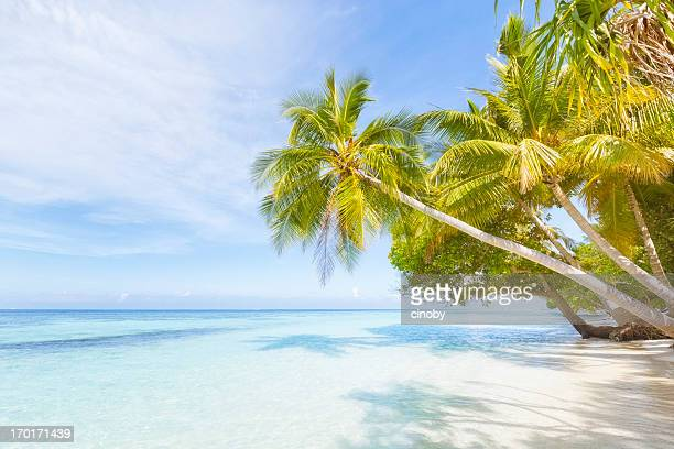 tropical beach - vilamendhoo stock photos and pictures