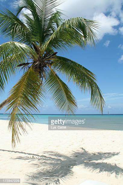 Tropischen Strand # 11