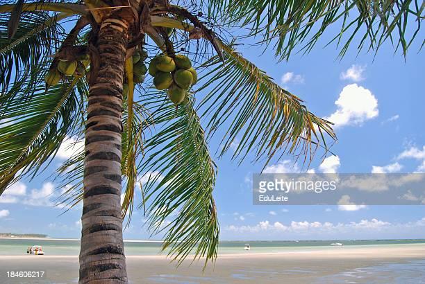 tropical beach - porto galinhas stock photos and pictures
