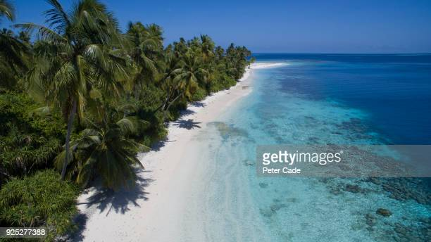 tropical beach - papua new guinea stock pictures, royalty-free photos & images