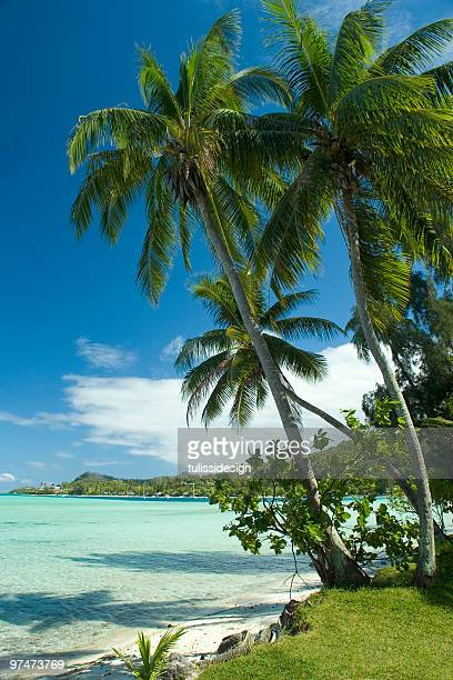 tropical beach - lagoon stock pictures, royalty-free photos & images