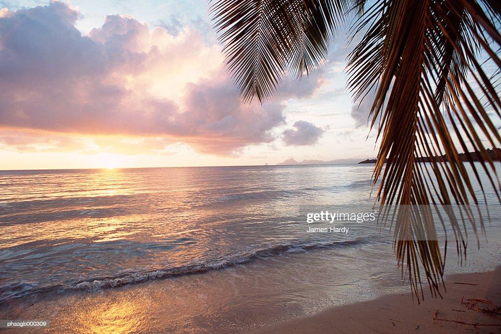 Tropical beach : Stockfoto
