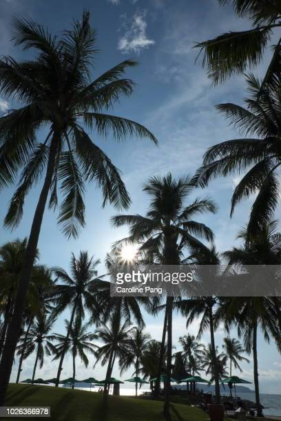 Tropical beach resort surrounded by coconut trees, an exotic getaway.