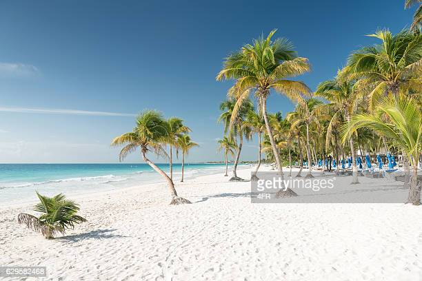 tropical beach, tulum, mexico - quintana roo stock pictures, royalty-free photos & images