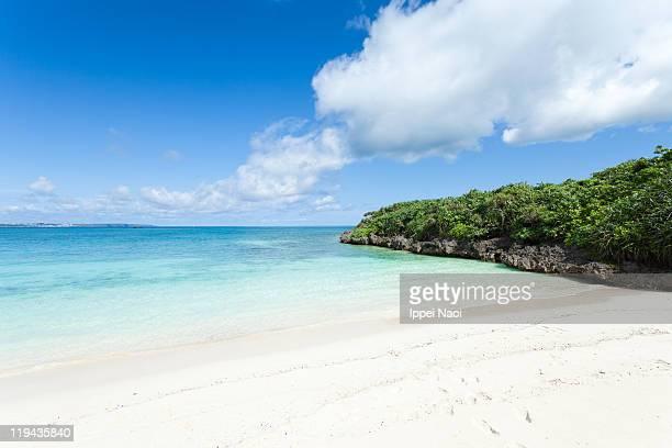 Tropical beach with clear blue sea
