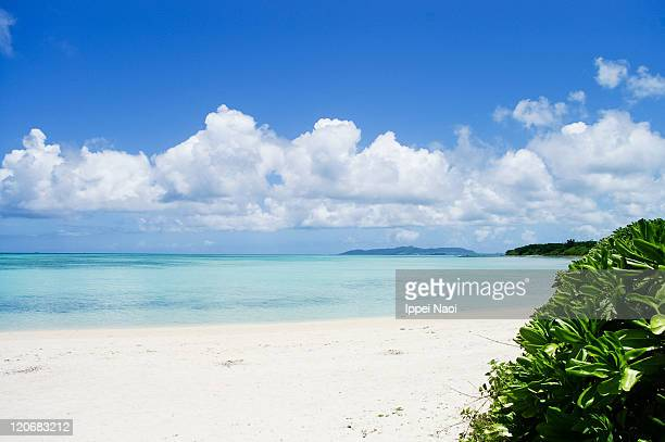 tropical beach with clear sea, taketomi island - 沖縄県 ストックフォトと画像